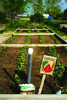 Vineyard-Garden