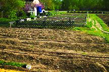Vineyard-Garden1