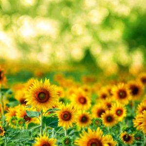 summergrowth